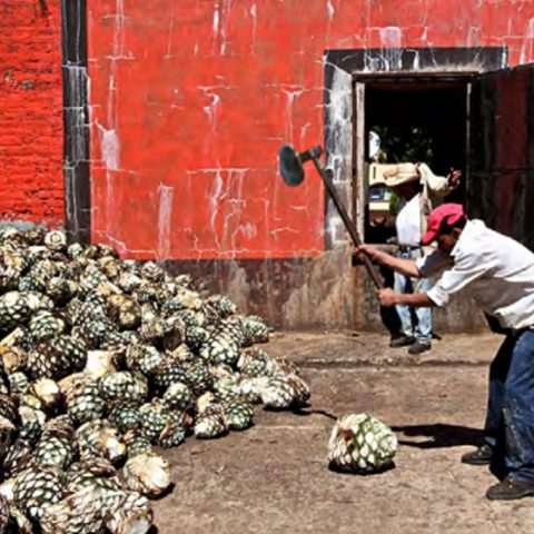 David Driscoll writes about his recent agave spirits trip