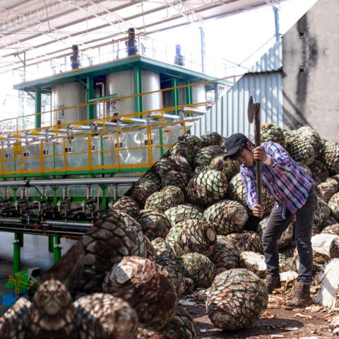 Information about Diffusers in Tequila Production Website Launched